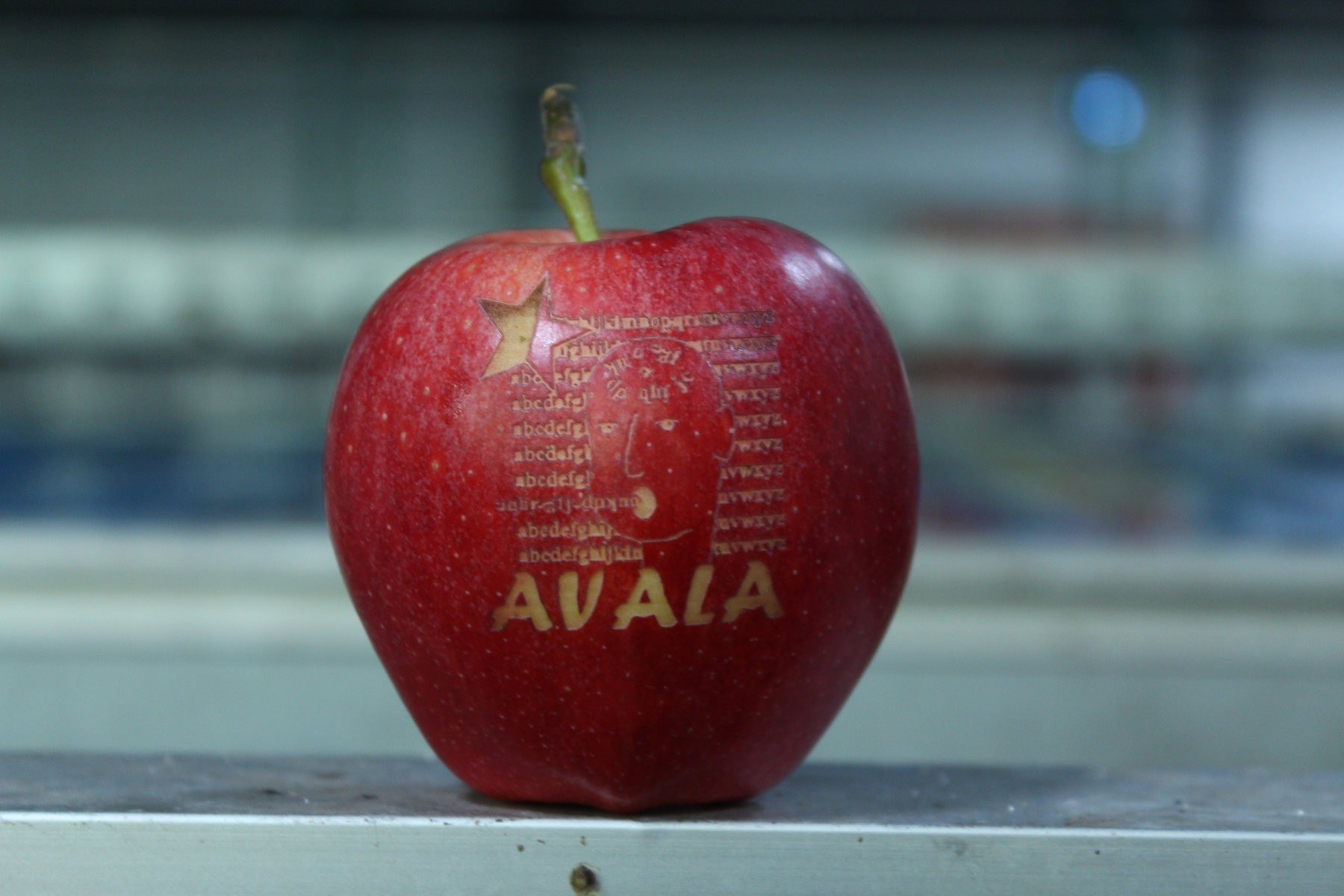 Avala-2019-89